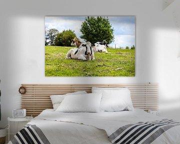 Glückliche Kühe von Harald Schottner