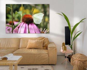 Tiere mit Flügeln von Melissa Blom