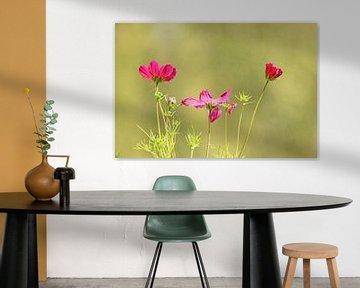 Tanzende Blumen von Wilma Overwijn