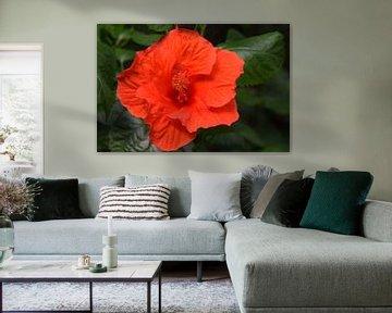 Rote Blume von Nicolette Vermeulen