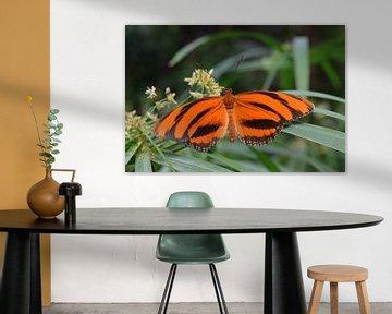 Oranger Schmetterling von Nicolette Vermeulen