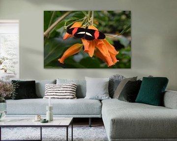 Bunter Schmetterling auf einer Orangenblüte von Nicolette Vermeulen
