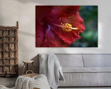 Schöne rote Blume aus nächster Nähe von Nicolette Vermeulen
