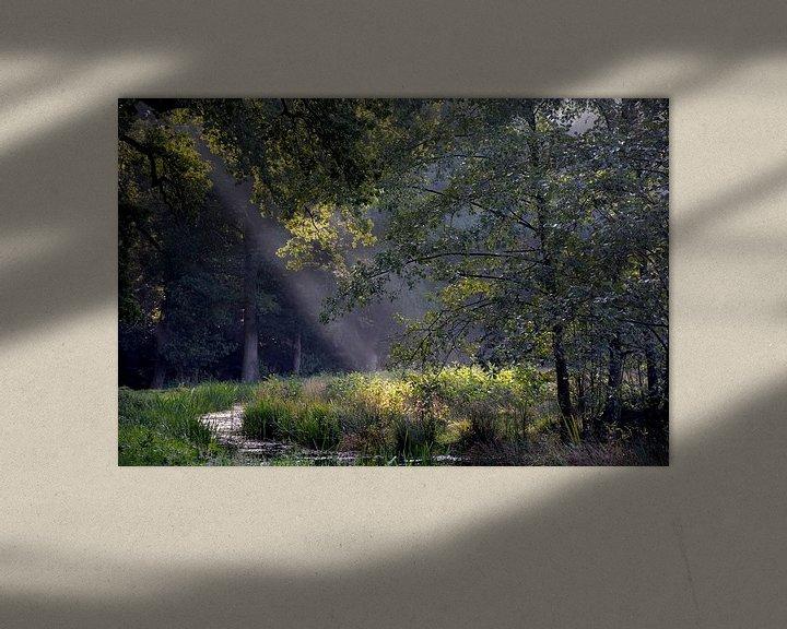 Sfeerimpressie: Asserbos bomen van Henriette Tischler van Sleen