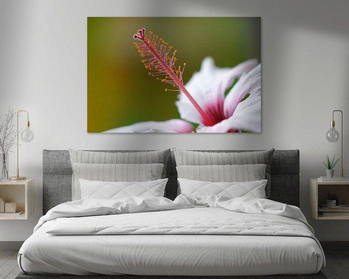 Sfeerimpressie: Hibiscus van Ineke Klaassen