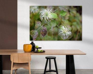 Wildblumen von Nicolette Vermeulen