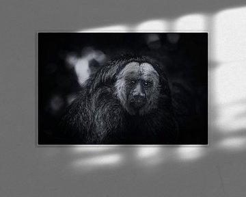 Weißes Gesicht Saki von Roger te Wierike
