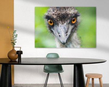 Emu von Foto Pia