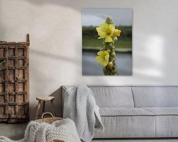 Wilde bloem van Made_ by_Sandy