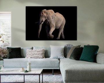 Laufender Elefant auf Schwarz von De Afrika Specialist