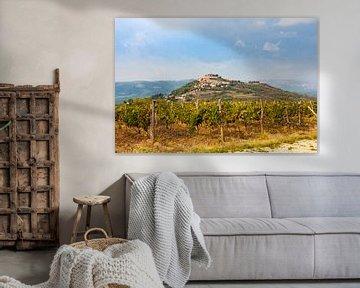 Motovun tussen de wijngaarden