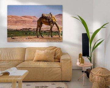 Kameel in Hoge Atlas, Marokko