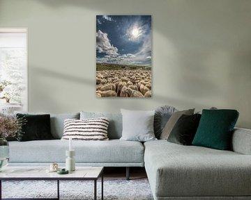Schafe im Noorderleeg bei Hallum von Harrie Muis