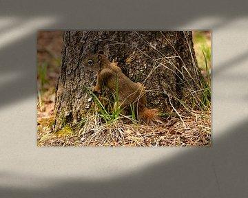 Squirl in der Abdeckung von Floris van Woudenberg