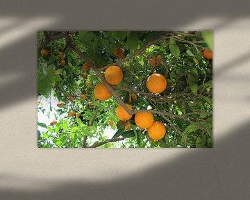 Orange sur Aart Lambertus Rietveld