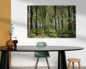 Bos van Sander de Jong