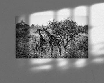 Auf der Suche nach etwas Schatten von Joris Pannemans - Loris Photography