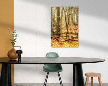 Mistig buekenbos tijdens een prachtige mistige herfstochtend van Sjoerd van der Wal