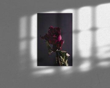Rote Rose von Marie Ndiaye