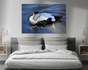 Eine Eiderente schwimmt im Wasser. von Nicolette Vermeulen