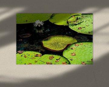 Tropische Lotus in de Amazone van John Ozguc