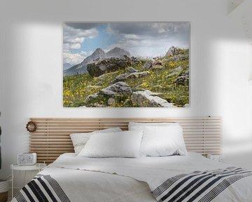 Alpenmarmot in de bergeb