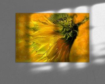 Sunflower-Day von Vera Laake