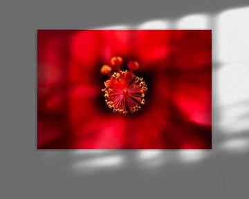 Blume von Christian Kwa