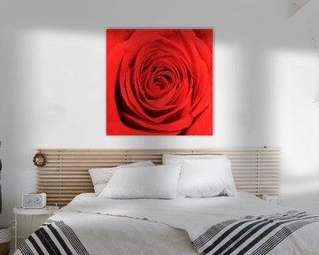 Rote Rose #1 von Gert Hilbink
