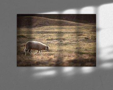 Ein einsames Schaf, das über die Wiese läuft. von Steven Marinus