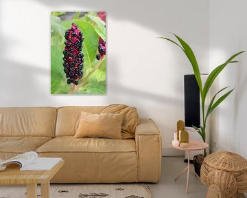 Schwarze Beeren zwischen den Blättern von Eline Lohman