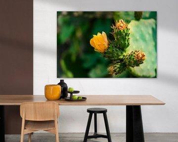 Oranje bloemen op een cactus in Peru van John Ozguc