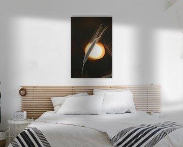 Strohhalm mit untergehender Sonne im Hintergrund von Steven Marinus