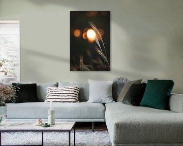 Strohalm met ondergaande zon in de achtergrond van Steven Marinus
