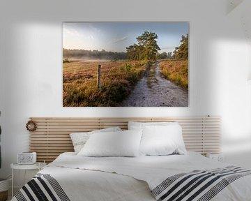 Sonnenaufgang auf der Heide des Teut in Limburg