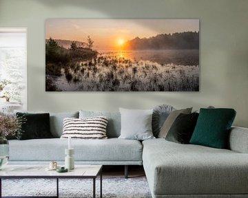 goldener Sonnenaufgang über dem Teich in den Bieren von Limburg, Belgien.