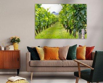 Vignoble de Sauvignon Blanc à Saint-Émilion sur Easycopters