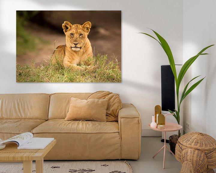 Sfeerimpressie: Lion cub van Claudia van Zanten
