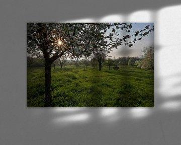 boomgaard vol bloesem van Wim Roebroek