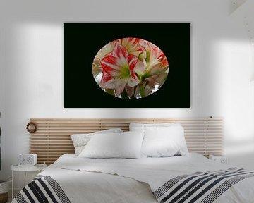Blume von Tatjana Korneeva