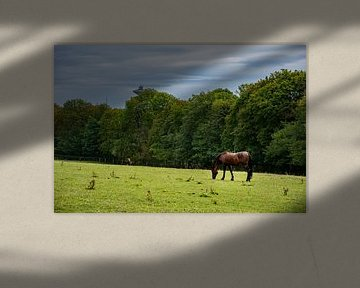 Das Pferd von Joerg Keller