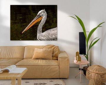 Knuspriger Pelikan von Maarten Verhees