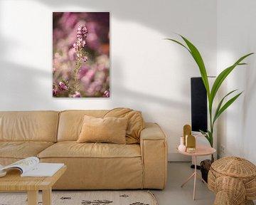 Rosa blühende Heide - 1 von Steven Marinus