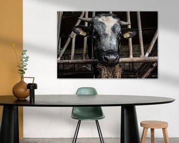 Stier von anouk kemper