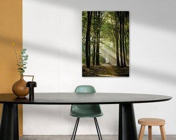 Het pad in het Speulderbos van Jos Erkamp