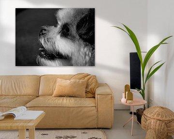 Hund von Marieke Peters-Brugmans