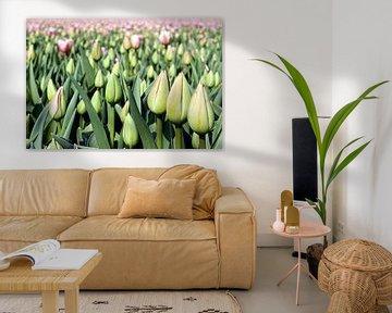 Tulip Time  von Remy De Milde