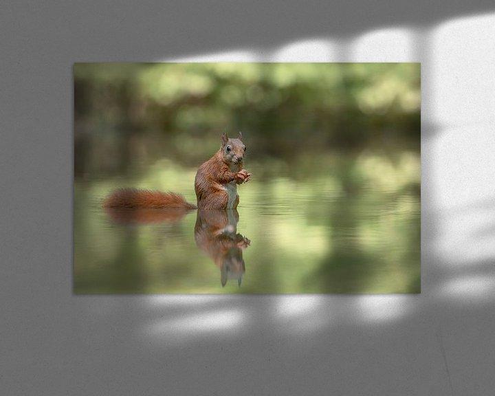Sfeerimpressie: reflectie van een eekhoorn van Albert Beukhof