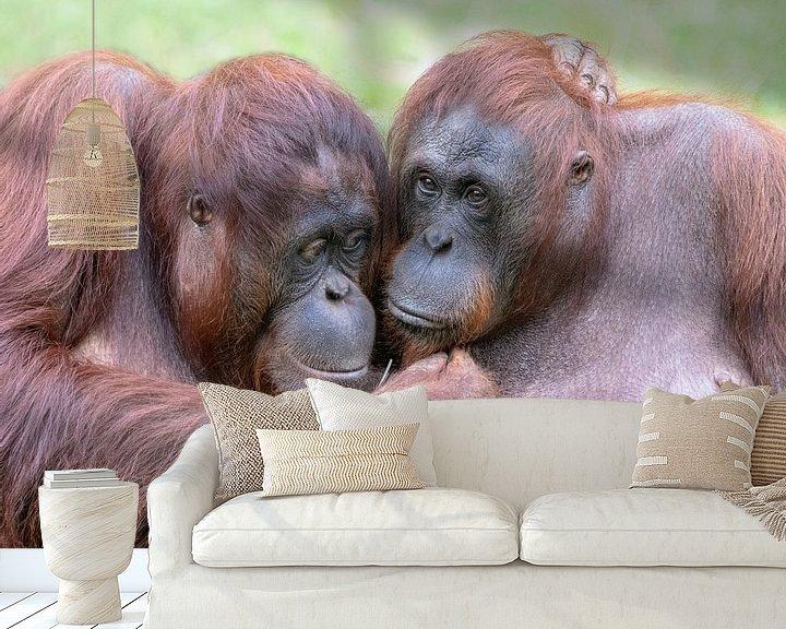 Sfeerimpressie behang: Twe Orang Oetanns knuffelen elkaar. van Albert Beukhof