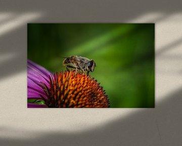 Wespe unter dem Pollen von Bart & Chantal De Wijs